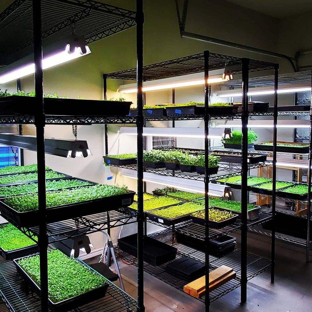Eat your greens organic microgreen farm tx