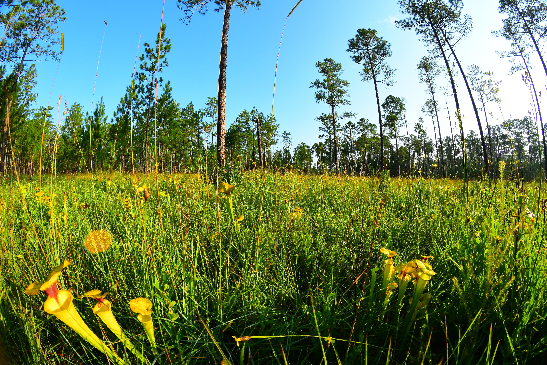 Buying Florida Land