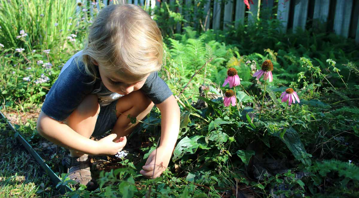 Small child playing with flowers in a backyard garden