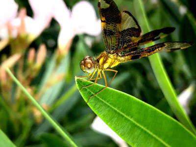close up of dragonfly on a leaf