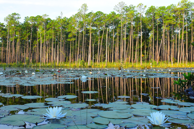 Florida Land - Beautiful Pond