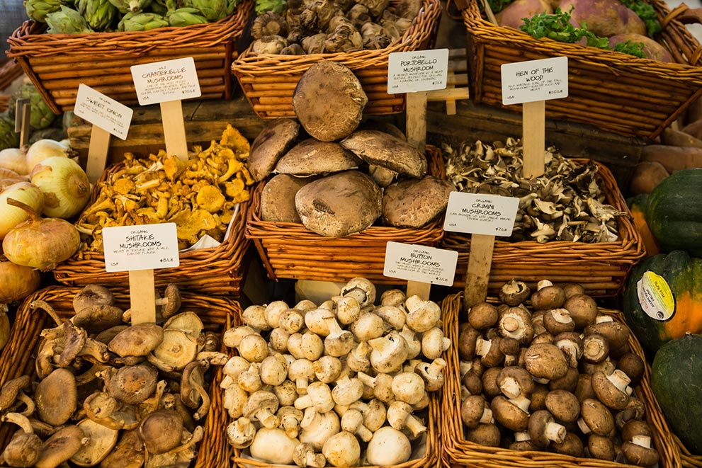 Mushroom Farming on Rural Land