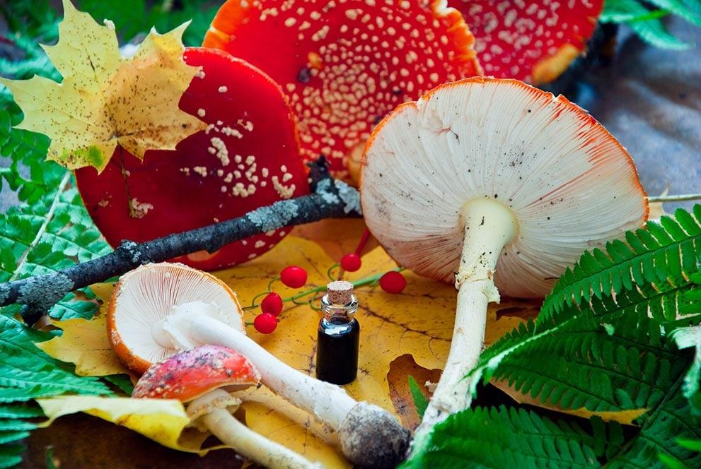 Mushrooms with Tincture