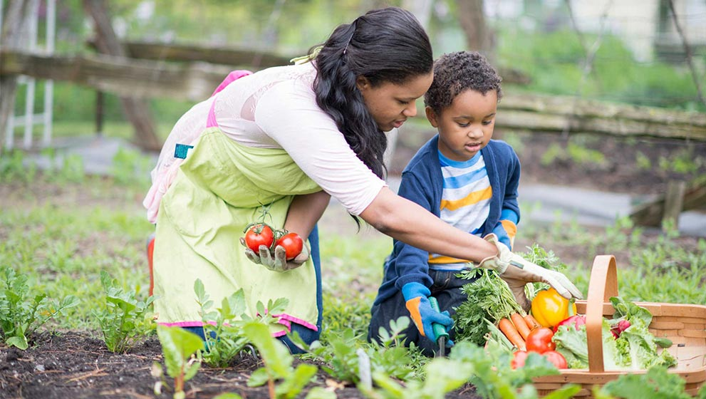 Mother helping son pick fresh vegetables