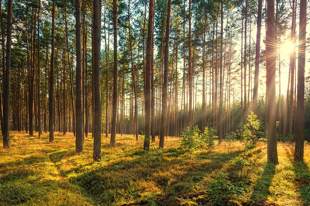 Timber Investment Property