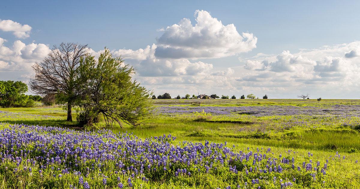 texas-landscape.jpg