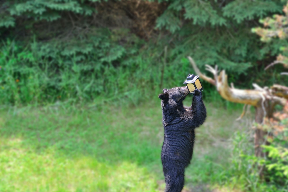Small black bear eating out of a bird feeder