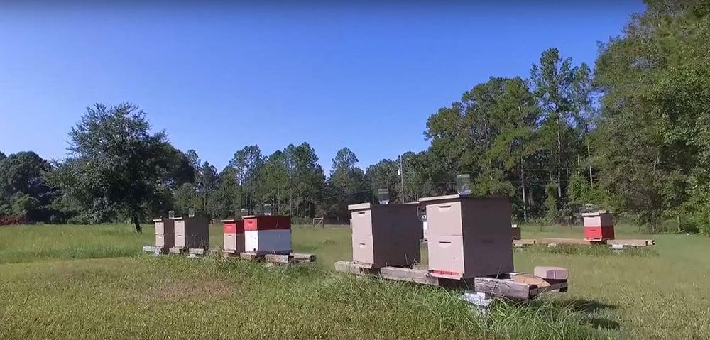 Beehives Karma Acres