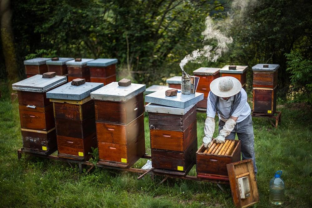 Beekeeper Tips
