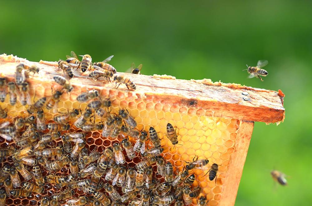 Beekeeping Guide