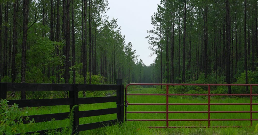 Forest and grass with red gate