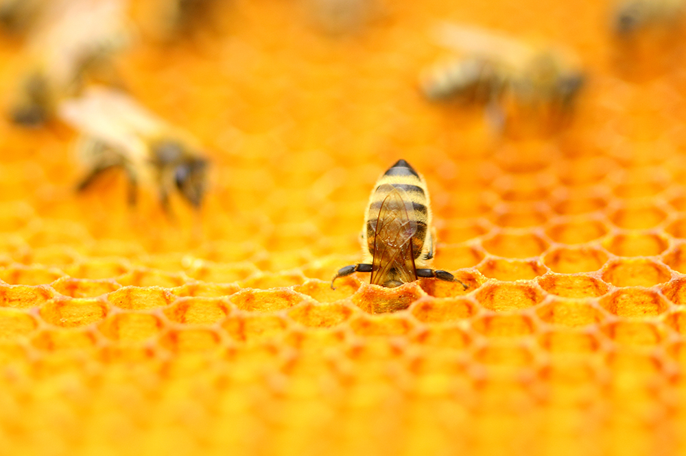 Starting a Hive of Your Own