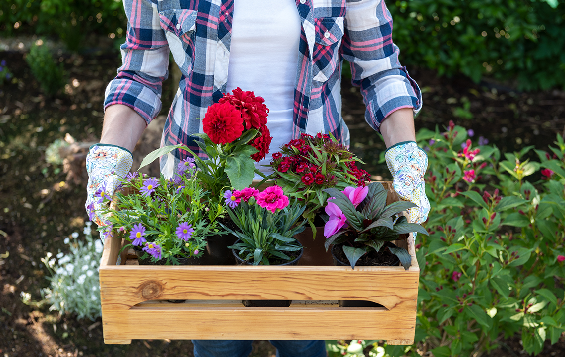 How Gardening Fights Aging