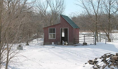 chicken house in winter