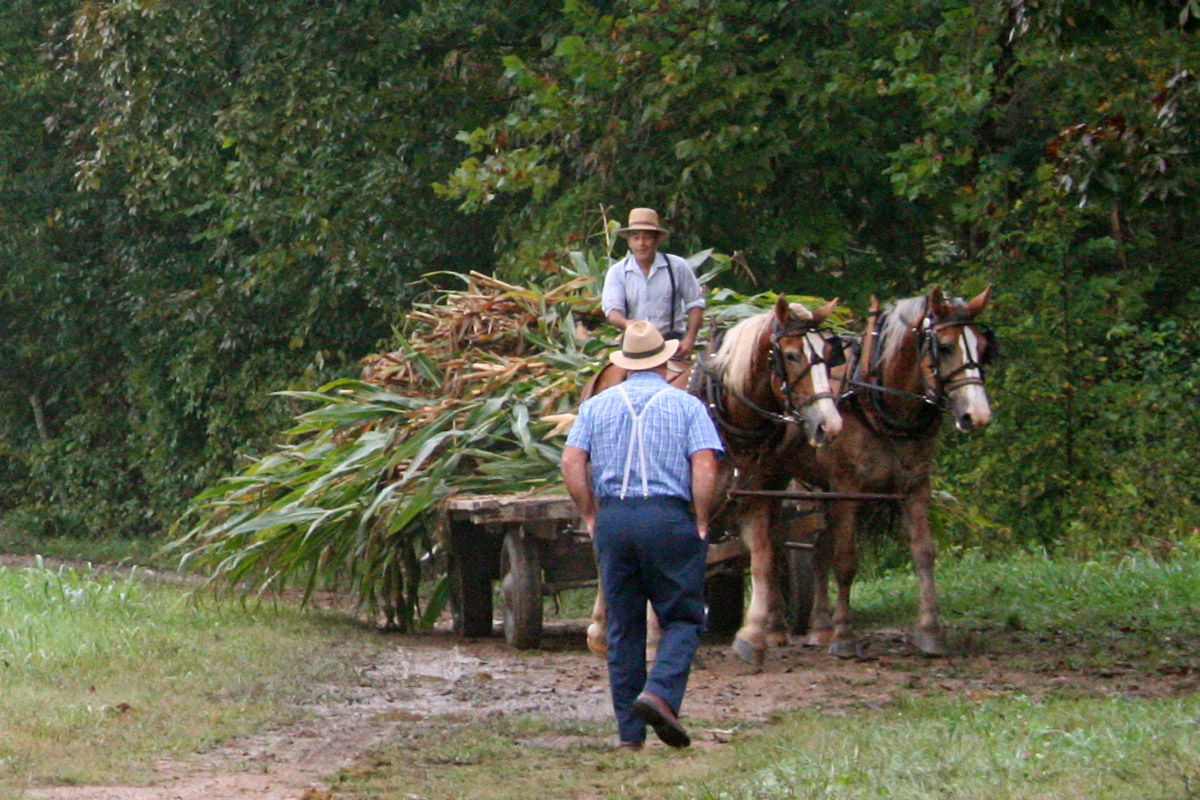 farmer on horse and carriage with plants talking to another farmer walking