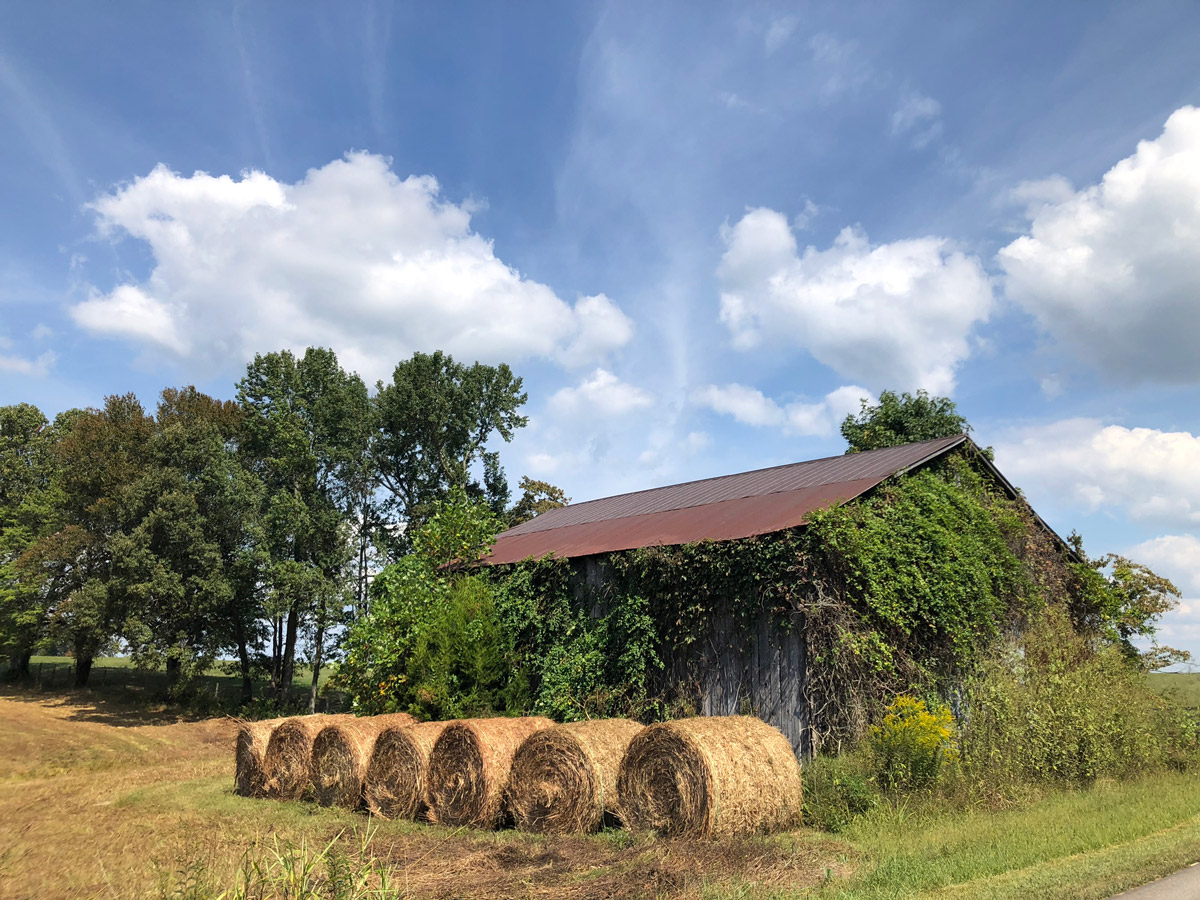 stacks of hay near a tobacco barn