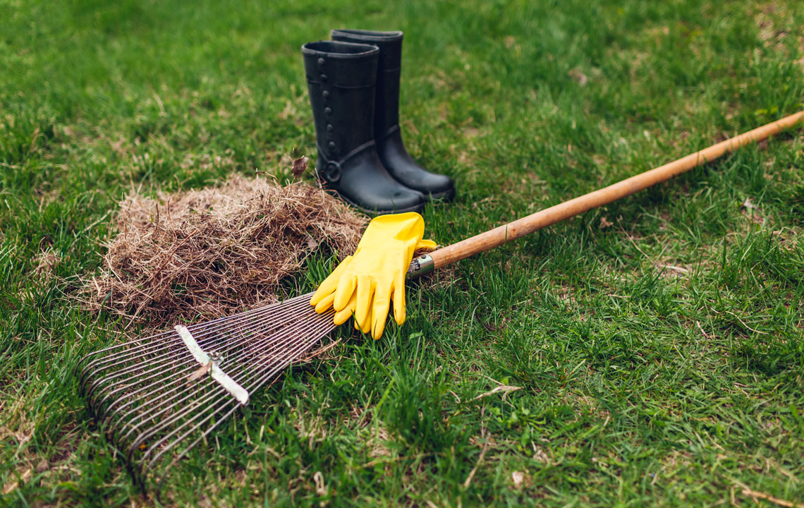 Lawn care tools placed on cut grass