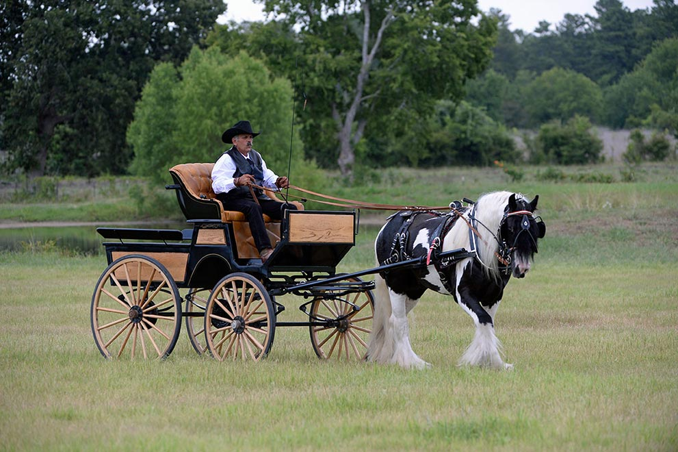 Cob Gypsy Horse and Carriage