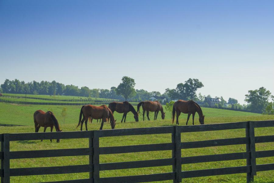 horse boarding acreage