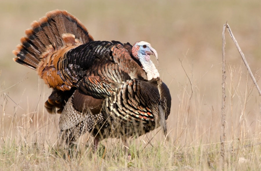TurkeyHuntingLand.jpg