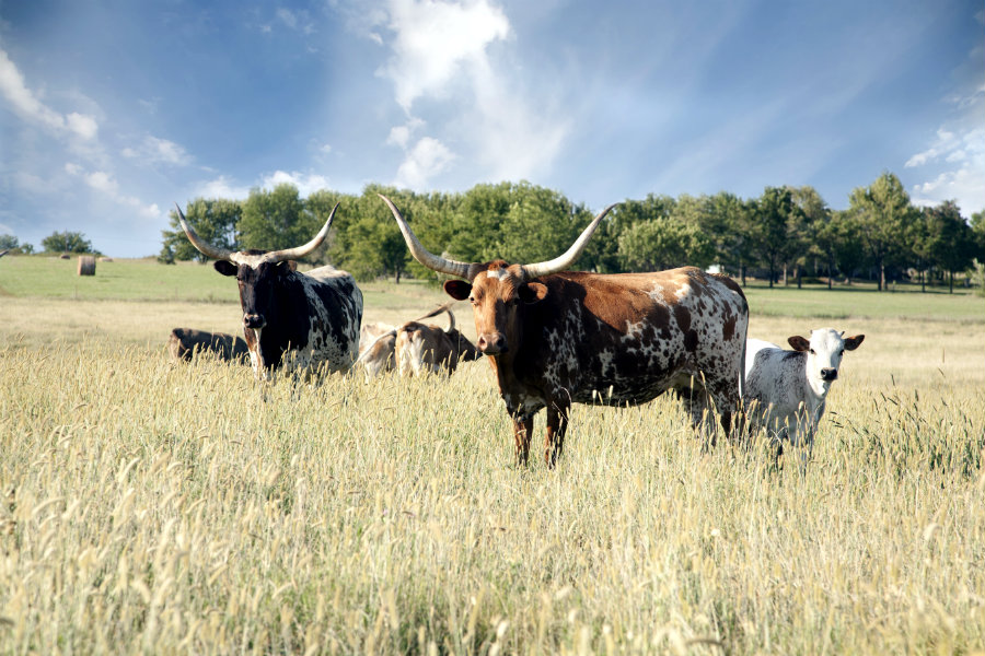 How to buy ag land in Texas