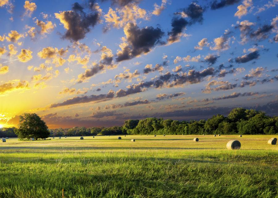 Buy Land in Texas