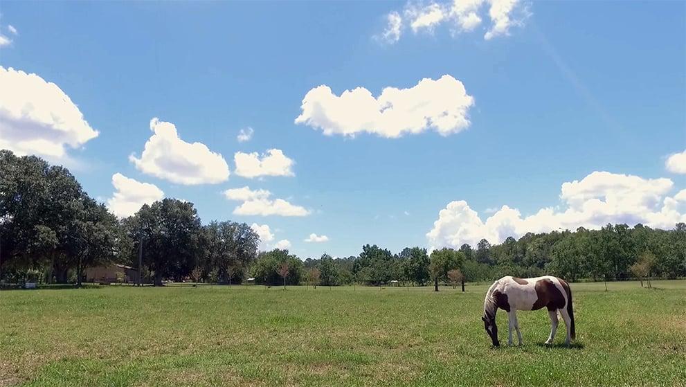 Monds Horse Pasture.jpg