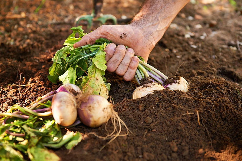 Gardening Exposes you to immune boosting bacteria