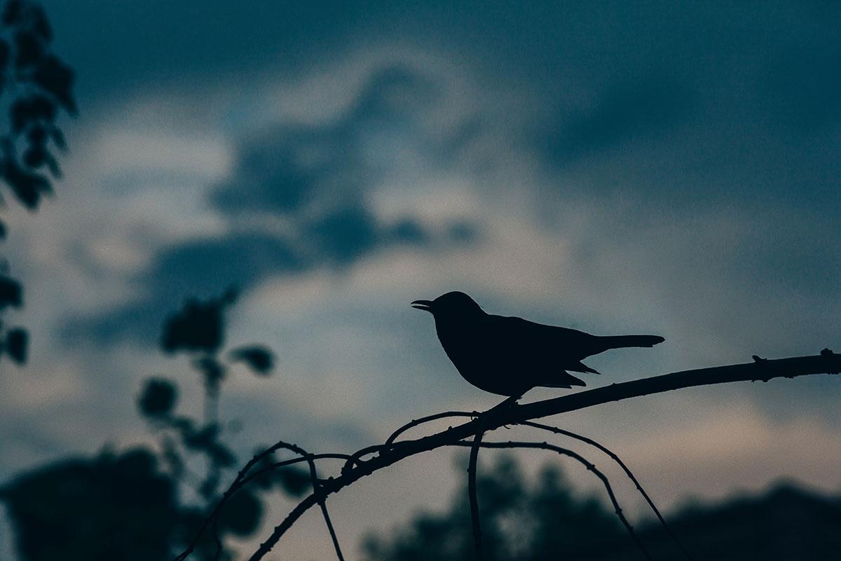 Lead-Dove-Hunting.jpg