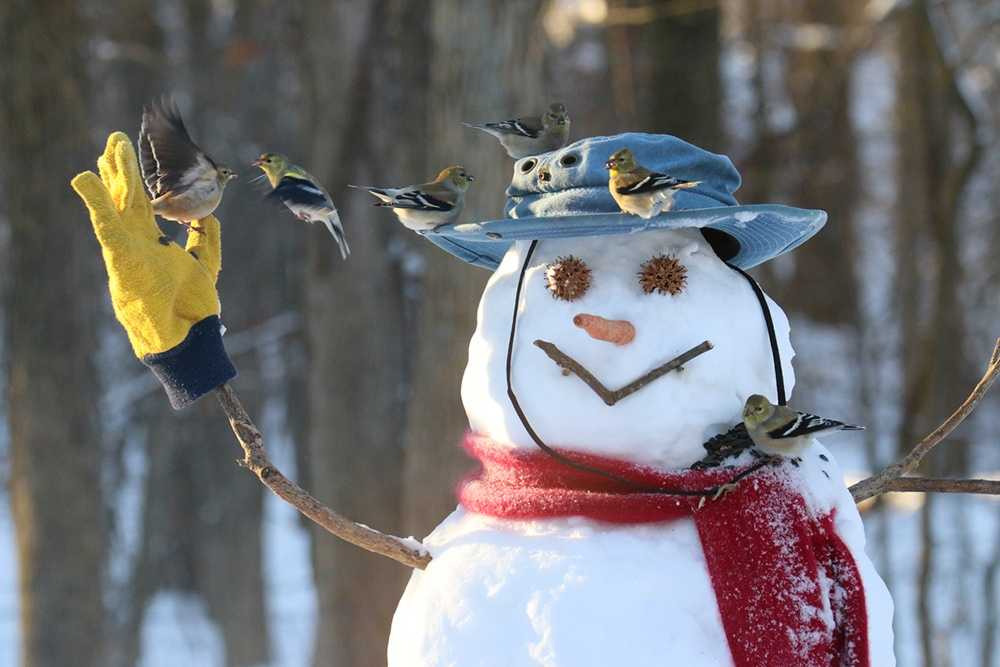 Build a real snowman in the country.jpg