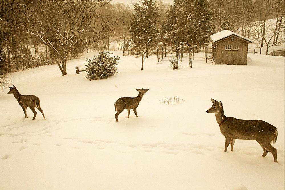 Deer Country Christmas.jpg