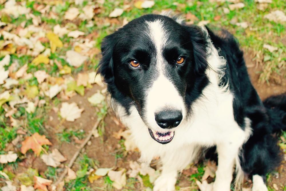 Homestead dog.jpg