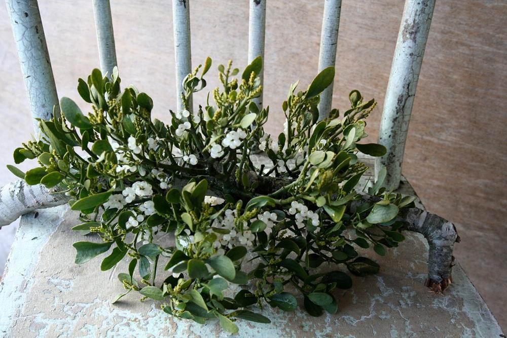 Mistletoe more than just kissing decoration.jpg