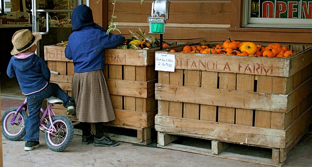 Children_inspect_Jack_be_Little_heirloom_pumpkins.jpg