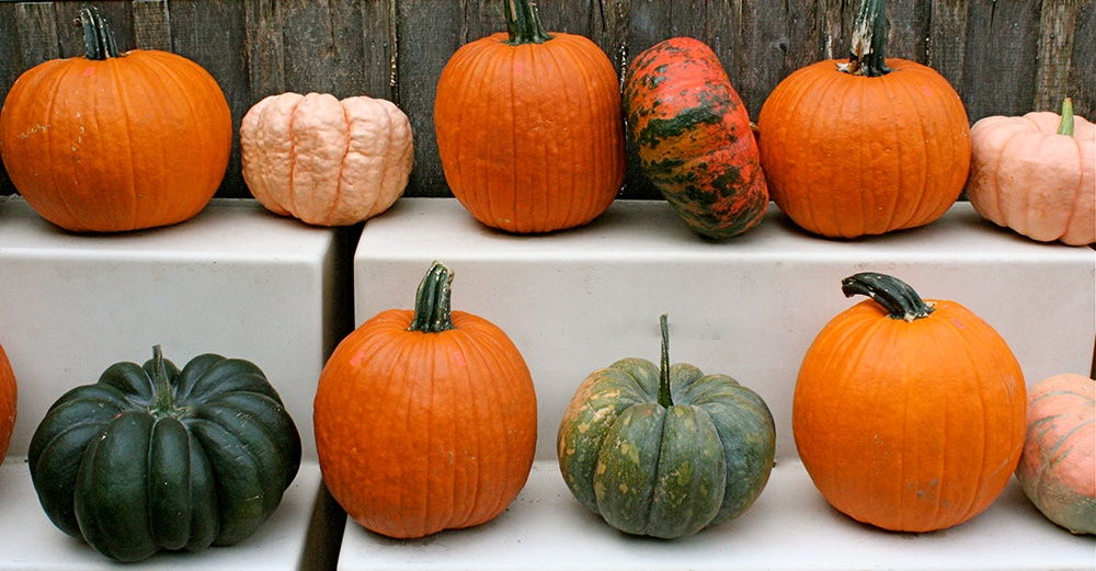 Connecticut_Field_Howden_and_other_heirloom_pumpkins.jpg