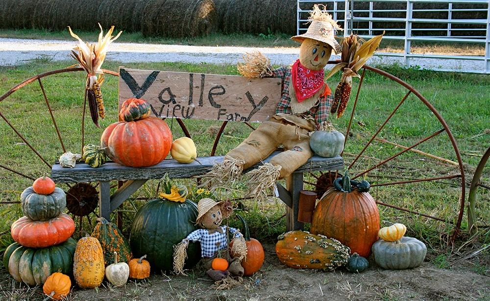 Heirloom_Pumpkin_and_Gourd_Display.jpg
