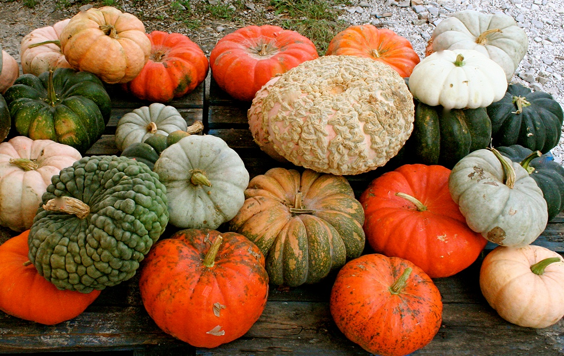 Heirloom_Pumpkins.jpg