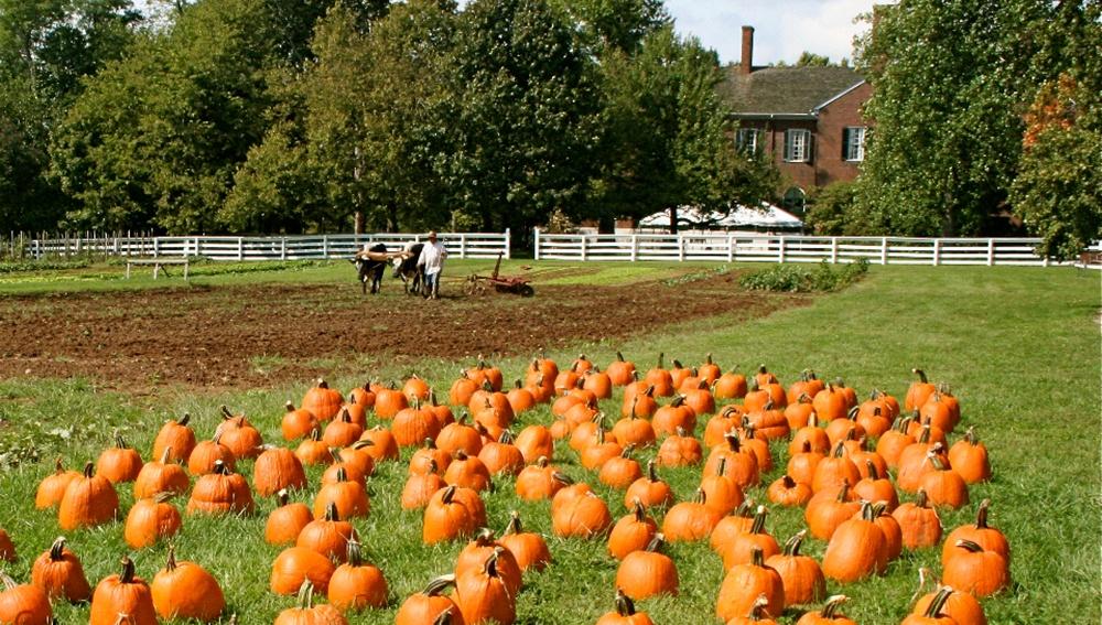 Howden_Heritage_Pumpkins.jpg