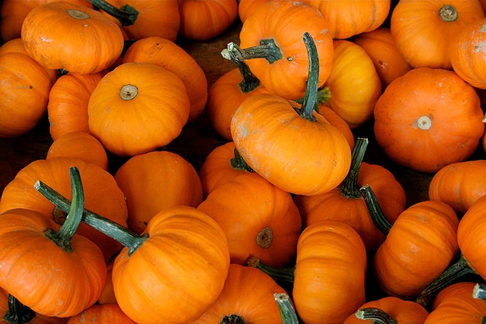 Jack_be_Littles_Heirloom_Pumpkins.jpg