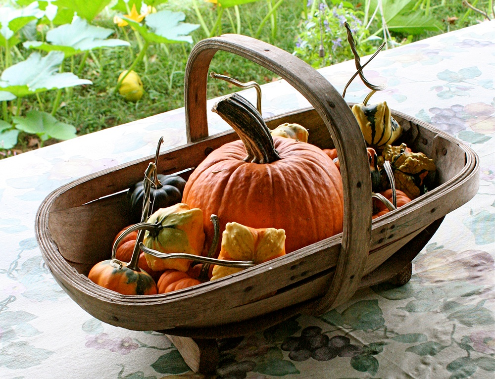 New_England_Pie_Heirloom_Pumpkin.jpg