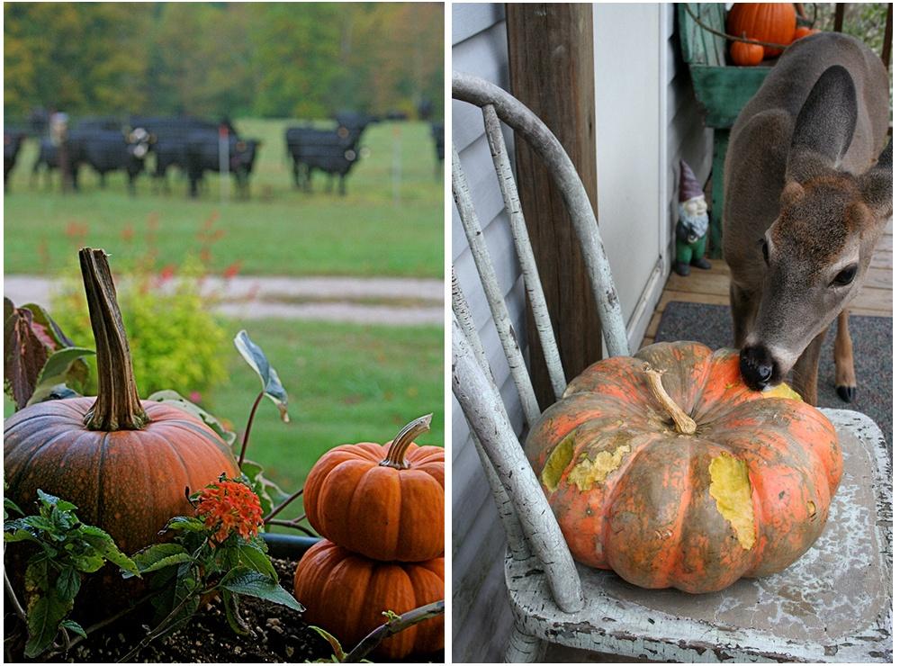 Rouge_Vif_DEtampes_heirloom_pumpkin.jpg