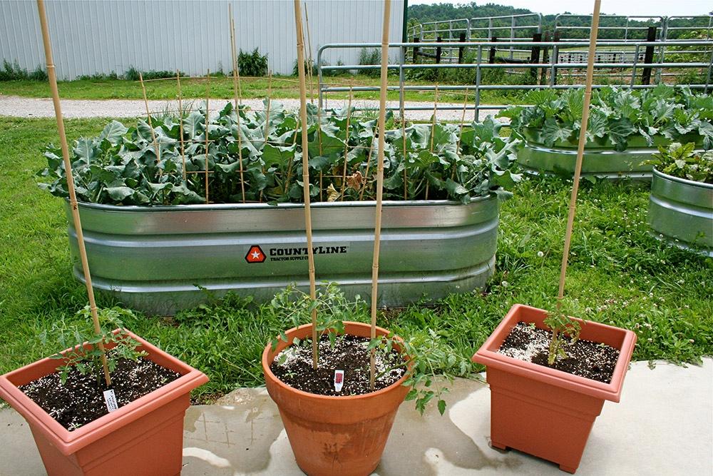 Spring Garden Containers.jpg