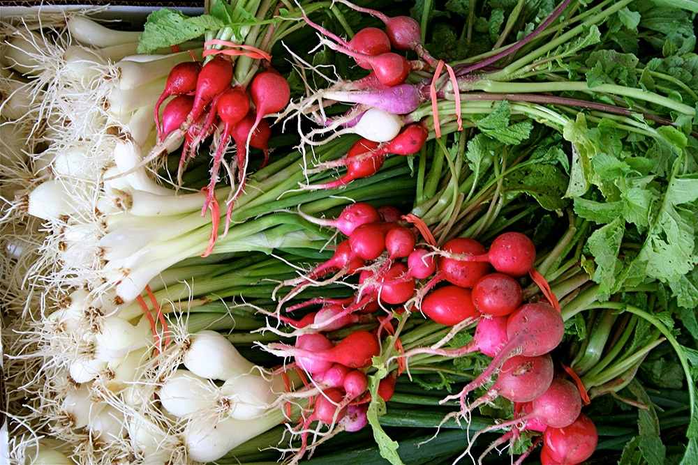 Spring Garden Radishes and Onions.jpg
