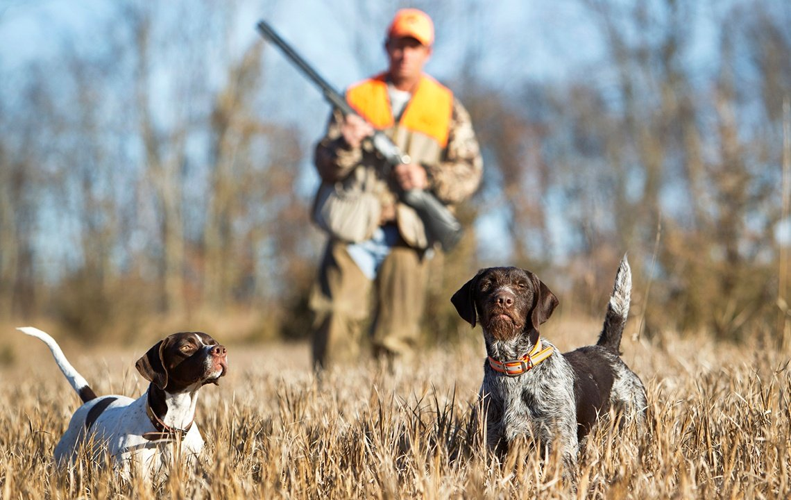 Best Hunting Dogs.jpg