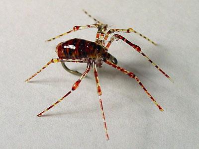 Fly-Tie-spitting-spider-400.jpg