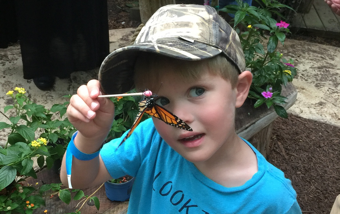 Butterfly at Science Center.jpg