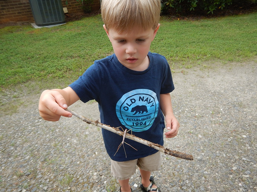 Science Center Stick Insect.jpg