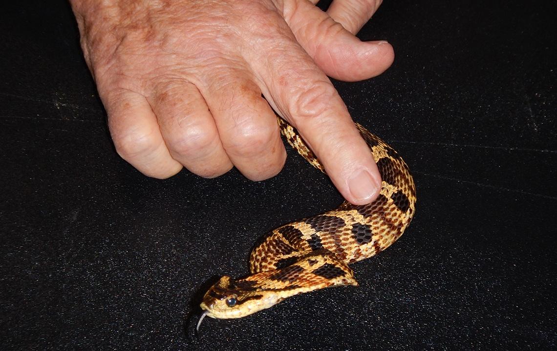 Snake Doctor 12.jpg