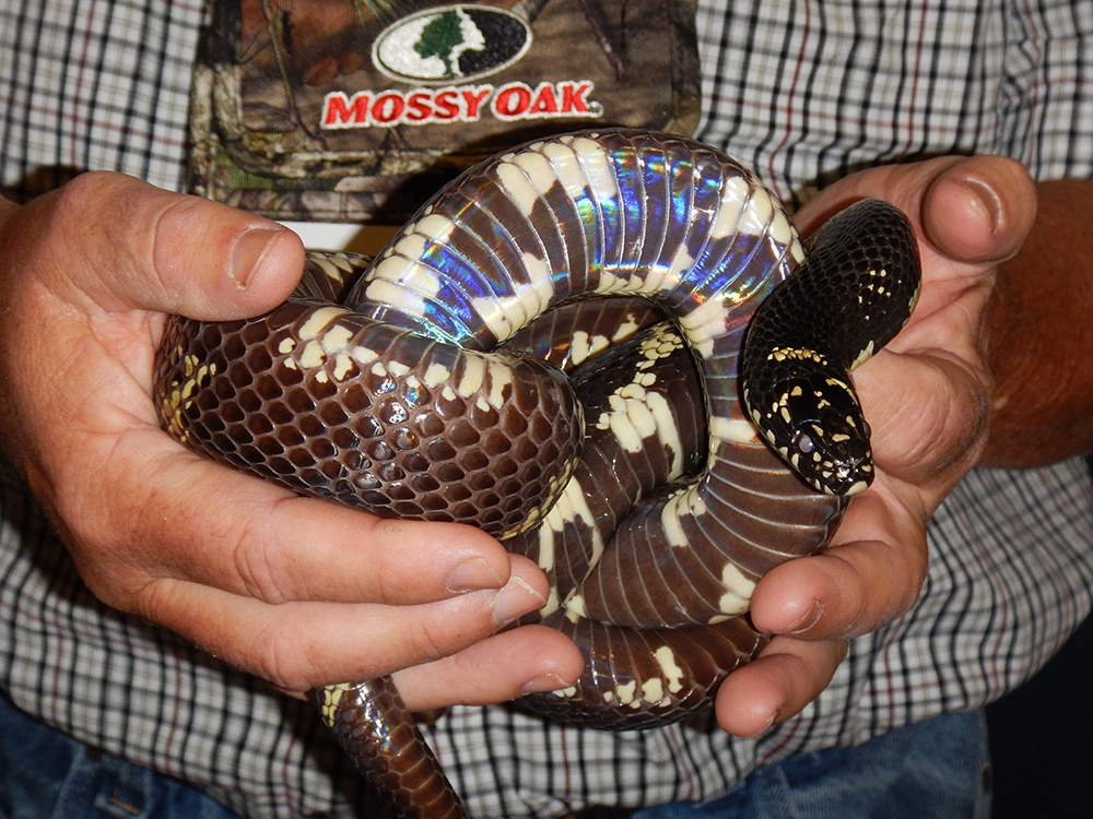 Snake Doctor 14.jpg