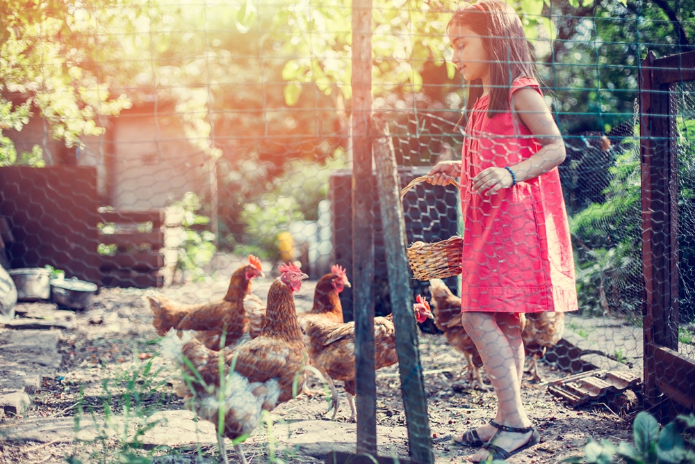 Kids Farm Chores with Chickens.jpg